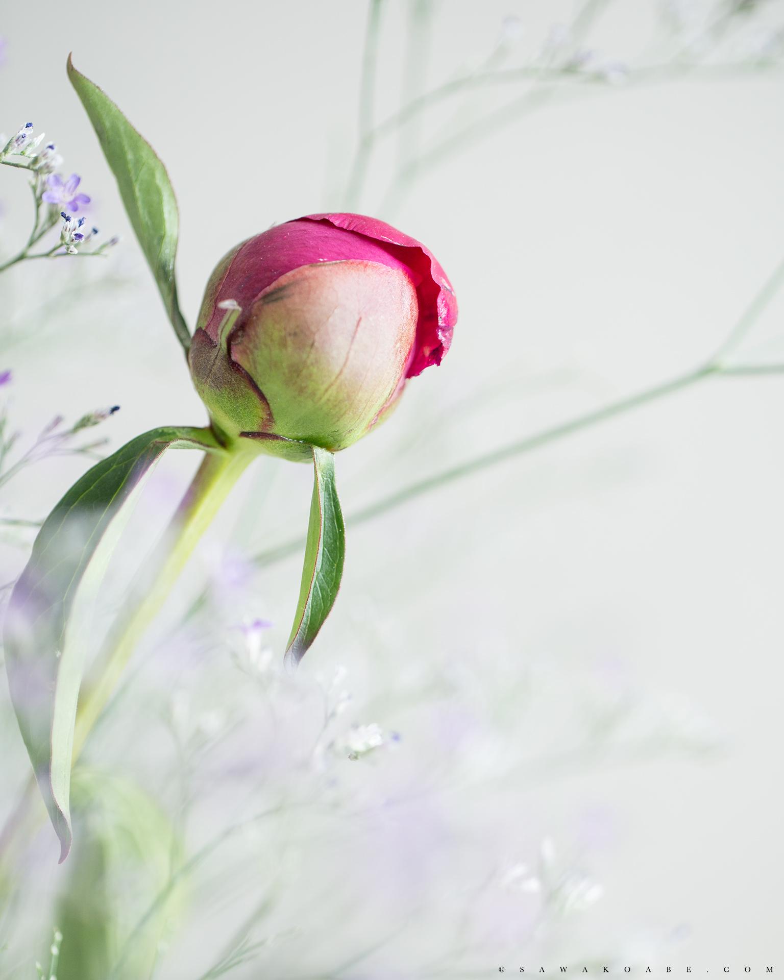 TABLEPHOTO -Ranunculus-